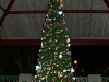 One of the Christmas trees at the McGregor Park pavilion.