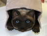 A wooden Kitty peeking out of a bag