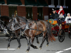2017 Clarksville Christmas Parade (180)