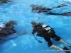 Discover Scuba Diving at Clarksville's Riverfest (5)