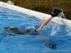 Discover Scuba Diving at Clarksville's Riverfest (8)