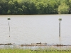 Two bird feeders sitting just off Wildlife road with their bases now underwater.