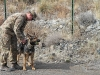 """Staff Sgt. Mathhew Phillips, an infantryman dog handler assigned to 3rd Brigade Combat Team """"Rakkasans,"""" 101st Airborne Division (Air Assault), prepares to unleash Sgt. 1st Class Rocky to demonstrate the technique military working dogs use to find road side bombs while at Forward Operating Base Salerno, Afghanistan, Feb. 26, 2013. Phillips and Rocky are apart of the Tactical Explosive Detection Dog program also known as the TEDD program, which trains Soldiers to work hand-in-hand with military working dogs. (U.S. photo by Spc. Brian Smith-Dutton Task Force 3/101 Public Affairs)"""