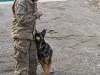 """Staff Sgt. Mathhew Phillips, an infantryman dog handler assigned to 3rd Brigade Combat Team """"Rakkasans,"""" 101st Airborne Division (Air Assault), rewards Sgt. 1st Class Rocky with some play time after a successful demonstration of bomb detection at Forward Operating Base Salerno, Afghanistan, Feb. 26, 2013. Phillips and Rocky are apart of the Tactical Explosive Detection Dog program also known as the TEDD program, which trains Soldiers to work hand-in-hand with military working dogs. (U.S. photo by Spc. Brian Smith-Dutton Task Force 3/101 Public Affairs)"""