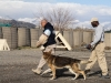 Employees working with AMK9, a civilian dog handling company working with the military, and Mo Mo, a security working dog, demonstrate proper technique of escorting personnel on Forward Operating Base Salerno, Afghanistan, Feb. 26, 2013. AMK9 works on military installations while Army dog handlers work outside of military instillations. (U.S. photo by Spc. Brian Smith-Dutton Task Force 3/101 Public Affairs)
