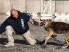 An employee with AMK9, a civilian dog handling company performs a demonstration with Mo Mo, a dog assigned to AMK9, of the dogs abilities to take down personnel if necessary on Forward Operating Base Salerno, Afghanistan, Feb. 26, 2013. AMK9 works on military installations while Army dog handlers work outside of military instillations. (U.S. photo by Spc. Brian Smith-Dutton Task Force 3/101 Public Affairs)