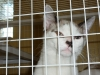 One of the cats available for adoptions at Montgomery County Animal Control.