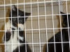 Two of the cats available for adoptions at Montgomery County Animal Control.