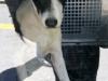 Montgomery County Animal Control Debuts Mobile Adoption Trailer
