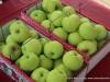 Montgomery County Farmers Market