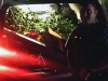 Deputy Ryan Ayrest helps load up the marijuana plants found at a grow Saturday.