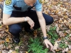 Deputy Dan Gagnon inspects a plant found growing outside a home Saturday.