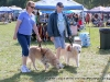 Guide dogs aid visually impaired visitors