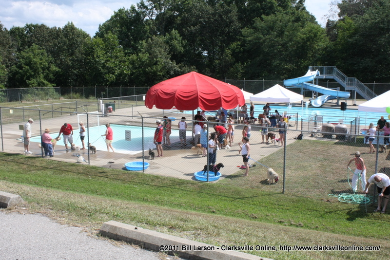 The City Of Clarksville 39 S Pooch Pool Party Was A Wonderful Event For Pets And Their Owners