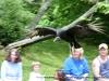 Casey the Vulture flies through the air