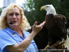 Dale Stokes introduces the afternoon crowd to their Bald Eagle Atsa Yazhi a 17 year old bald eagle