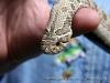 The Reptiliacs