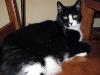 Cat Masterson