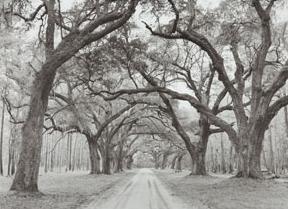 co-oak-arches.jpg