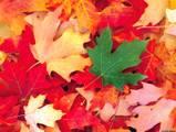 foliage-1.jpg
