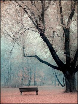 foliage-4-w-bench.jpg