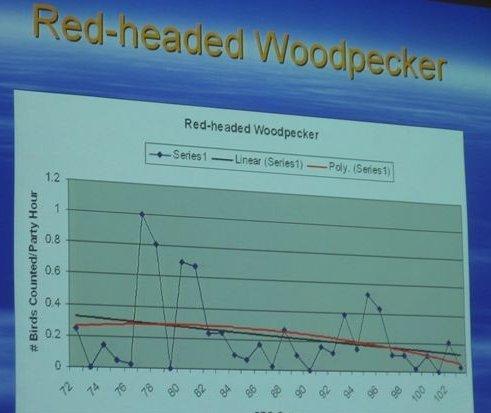 co-birds-red-headed-woodpecker.JPG