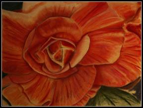co-halloran-flowernet.jpg
