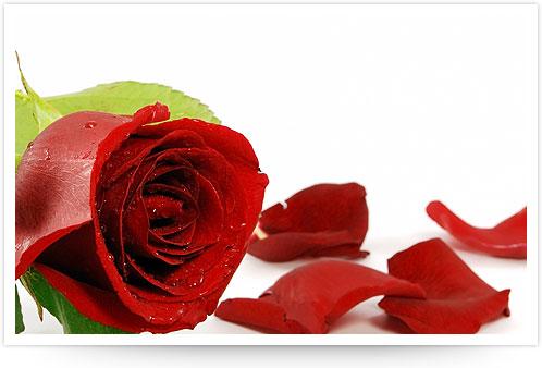co-roses.jpg