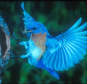 Hummingbirds Archives Clarksville Tn Online