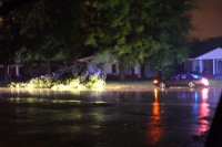 A downed tree blocks a portion of Madison Avenue.