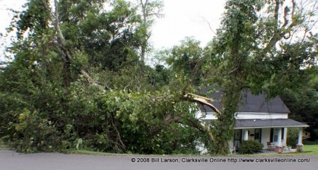 A Osage orange tree has fallen into the yard of a home on Powers street in Clarksville, TN