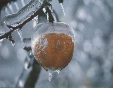 icy-apple