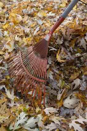 leaves-rake