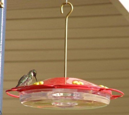 My first hummingbird of the year