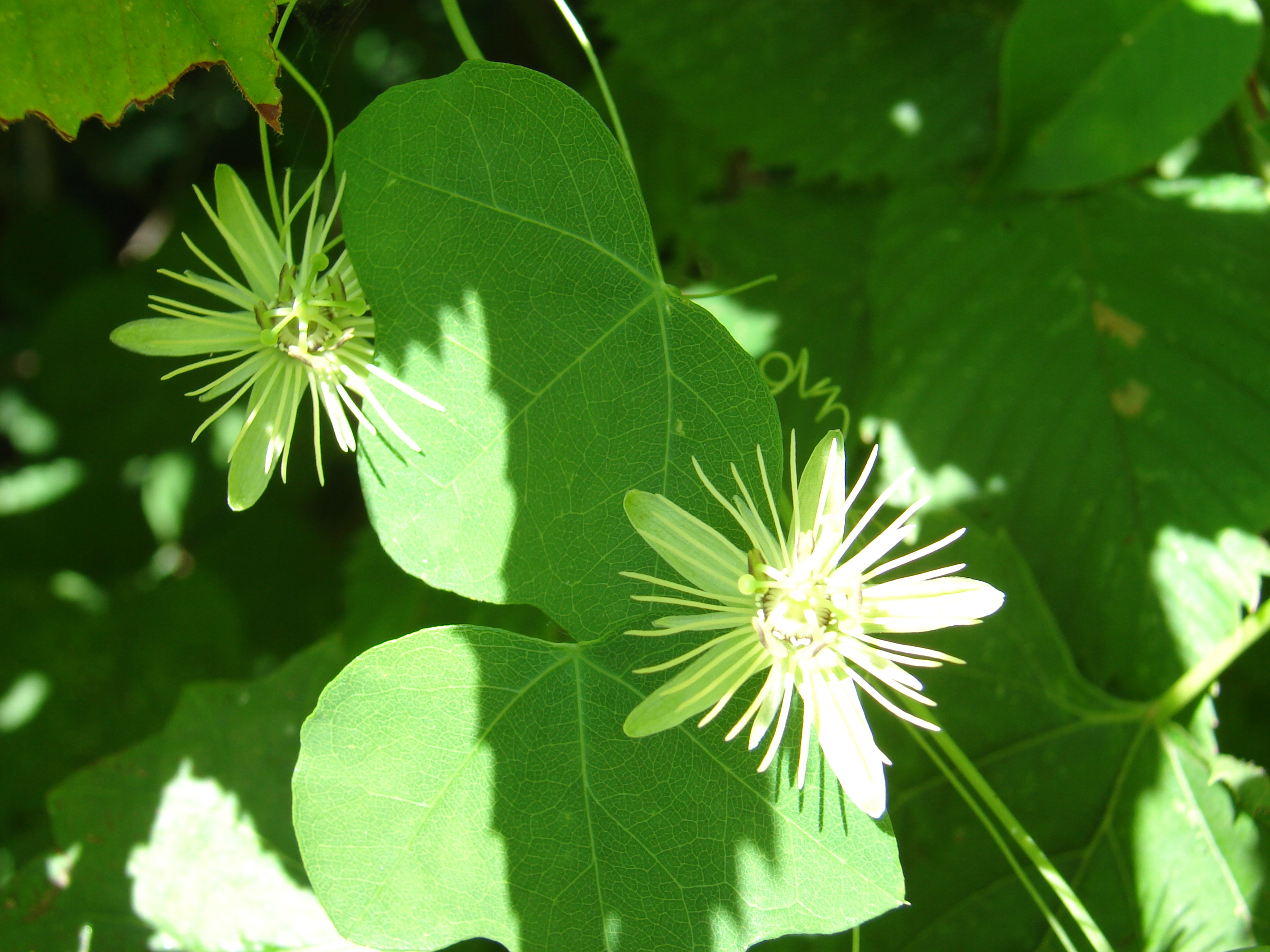 News From The Dunbar Cave State Natural Area Clarksville Tn Online