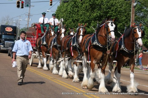 The Budweiser Clydesdales visit Clarksville this week.