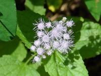 August 09 mist flower009