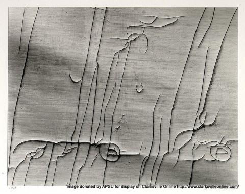 Cracked Wallpaper taken by Thomas Reed in 1978