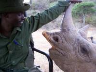 Milking the Rhino - image 1
