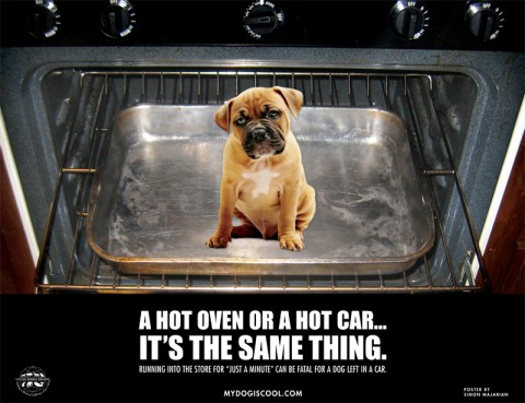 A Hot Oven or a Hot Car - It's the Same Thing.