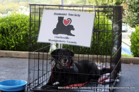 One of the pets the Humane Society brought to the Downtown Market on Saturday