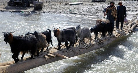 A local villager and his goats cross the old make-shift bridge Soldiers from the 2nd and Mortar Platoons of Troop A, 1st Squadron, 172nd Cavalry Regiment, replaced with a 150-foot bridge Nov. 10th. (Photo by U.S. Army Staff Sgt. Whitney Hughes, Task Force Wolverine Public Affairs, 86th Infantry Brigade Combat Team)
