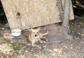 During Winter Months. Thousands of Dogs in Our Community Seek Warmth