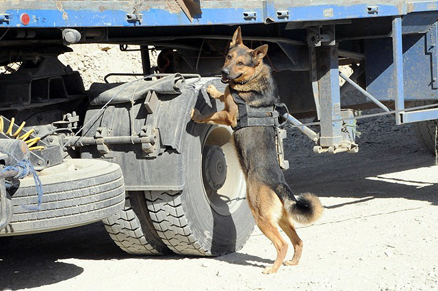 Military dog airborne - photo#18