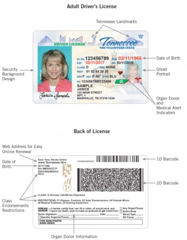 Adult Driver's License