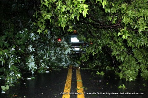 The car trapped under a fallen tree on Zinc Plant Road