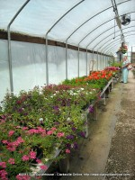Clarksville Resident Jerry Church looks at some of the flower varieties available at the Flower Pot