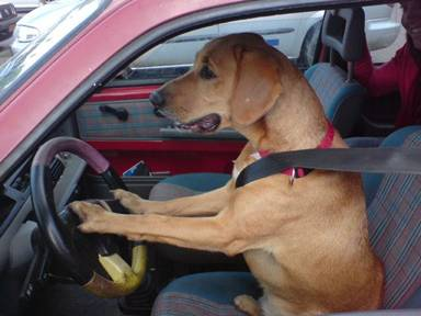 Is your car so dirty that your dog is willing to drive it to the Car Wash for you?