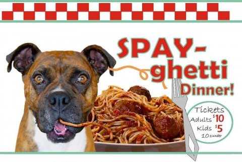 SPAY-Ghetti Dinner Fundraiser