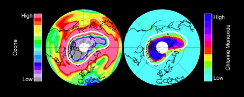 Left: Ozone in Earth's stratosphere at an altitude of approximately 12 miles (20 kilometers) in mid-March 2011, near the peak of the 2011 Arctic ozone loss. Right: chlorine monoxide – the primary agent of chemical ozone destruction in the cold polar lower stratosphere – for the same day and altitude. The white line marks the area within which the chemical ozone destruction took place. (Image credit: NASA/JPL-Caltech)